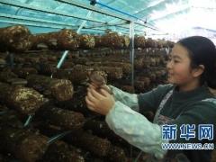 新華網:2019中國·貴州食用菌產業發展大會在黔西南開幕 ()