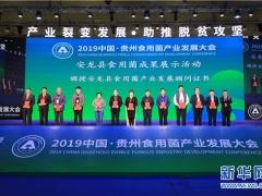 新華網:食用菌助脫貧  貴州安龍亮成果