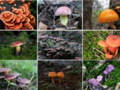 浙江庆元建成野生香菇、黄靛牛肝菌种质资源保育区