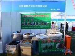 B39:云南滇野农业科技有限公司 (3)