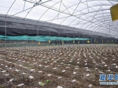 成都金堂县致力打造羊肚菌出口基地县