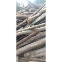食用菌阔叶林杂木屑