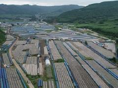 吉林汪清县携手国家发展改革委倾力打造黑木耳产业品牌