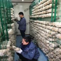平菇出菇架厂家 平菇出菇网架价格 工厂化出菇架
