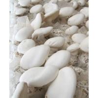 云南食用菌白灵菇各种规格批发销售