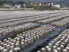 纳雍县锅圈岩乡:冬忙种植黑木耳 来年高产助增收