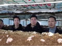 贵州丰源工厂化栽培红托竹荪通过专家评定