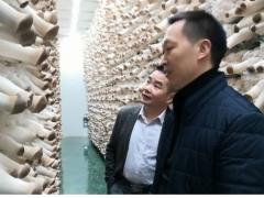 贵州大学食用菌研究院到道真调研食用菌产业 ()