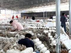 湖南江华县:十吨食用菌捐赠全市疫区 ()