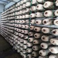 金针菇养殖架厂家 定做灵芝出菇房网架 批发双包菇出菇网格
