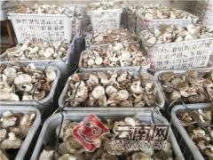 云南宁洱:支部引领生产忙 香菇基地不减产 ()
