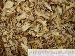 供應干蘑菇(食用菌干品-美味牛肝菌)