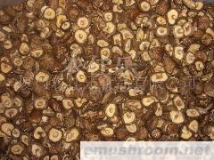 供应香菇,今年新产茶花菇,mushroom