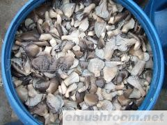 供应盐渍平菇