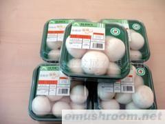 大量供应A级优质双孢菇
