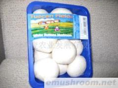 供应新鲜蘑菇