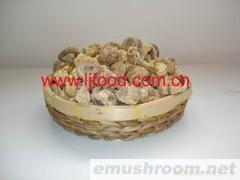供应姬松茸(巴西蘑菇)