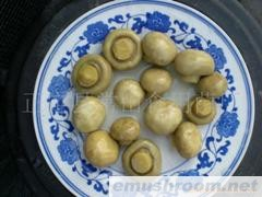 供应betvlctor伟德 蘑菇 口蘑 mushroom