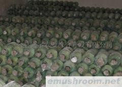 供應鹽漬雙孢菇子  干片  菌種