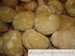 供应干品猴头菇