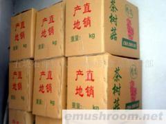 供应大量批茶树菇