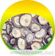 中药材、中成药批发茶花菇白花菇,光面菇丝条、干香菇