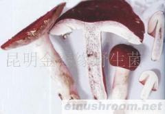 供应云菌红玫瑰,大红菌,野生菌,食用菌,