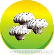 07B01干香菇出口,mushroom ,双龙香菇