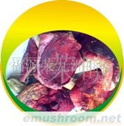 09B00 red mushroom、野生红蘑菇