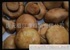 供应双孢蘑菇(图)
