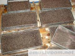 批發出口級成熟黑塊菌速凍品 塊菌干片 塊菌釘 塊菌