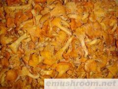 批发鸡油菌;美味牛肝菌;红葱;白葱;黄赖头;高脚葱