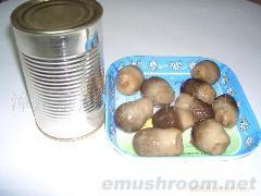 供應草菇罐頭產品