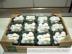 供应大量A级双孢菇