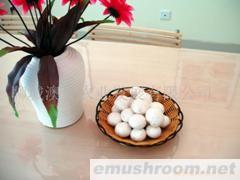 供应特级双孢菇(新鲜)