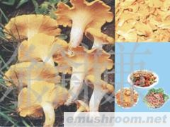 供应鸡油菌,野生菌,食用菌,野花,野菜