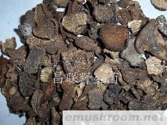 批发供应野生菌,四川食用菌,山珍,土特产,农副产品
