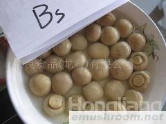 供应出口蘑菇