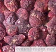供应野生红菇