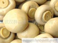 供應鹽漬雙孢菇
