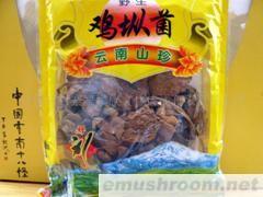 供应野生鸡棕菌