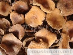 供应 野生菌 牛肝菌 奶江菌 松乳菇 绿色食品