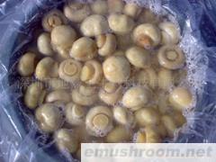 供应醋渍双孢蘑菇(整粒)