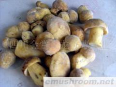 供應速凍白蔥菌