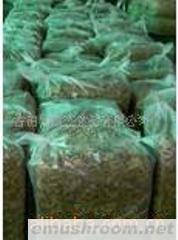 供应大量散装茶树菇