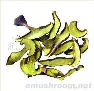 供应牛肝菌、蘑菇、香菇、灰树花、土特产、山珍