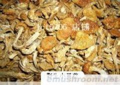 供应野生榆黄蘑