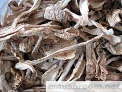 供应B级白鸡棕菌