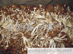 供应一级茶树菇(图)
