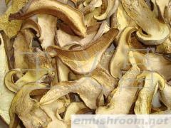 批发供应野生菌白葱菌、红葱菌